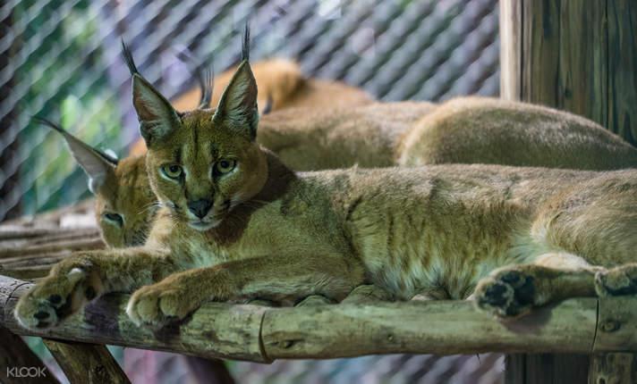 Sanya Colour Zoo