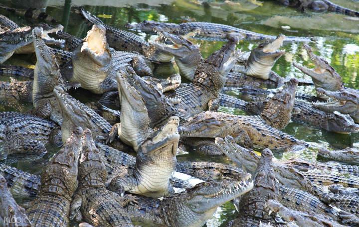 马尼拉苏比克野生动物园门票