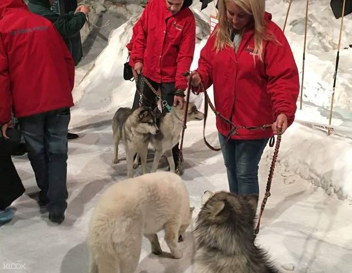 international antarctic centre huskies