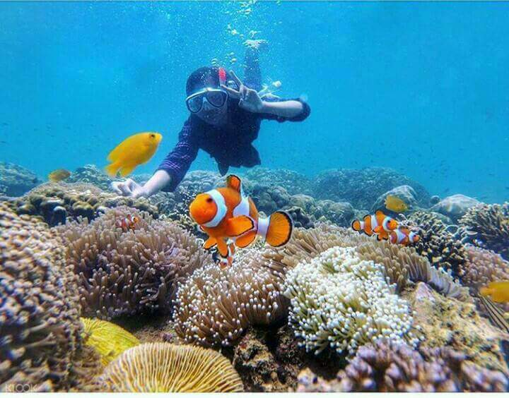snorkeler berpose dengan ikan giru
