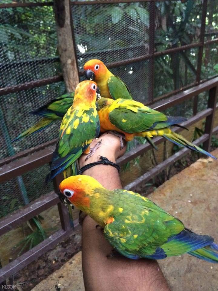 parrots kl tower mini zoo