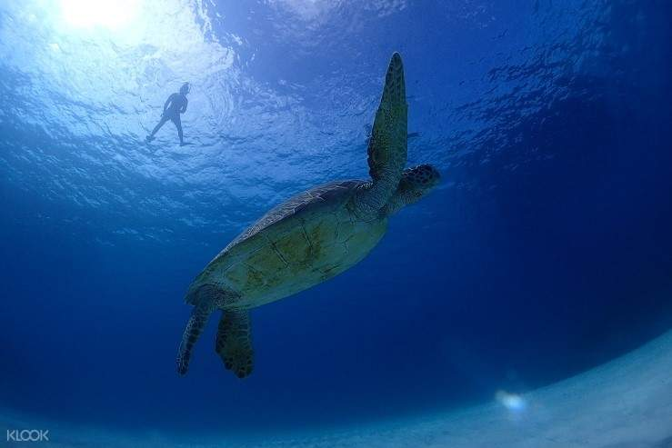 Having the memorial time during snorkeling with Sea Turtles