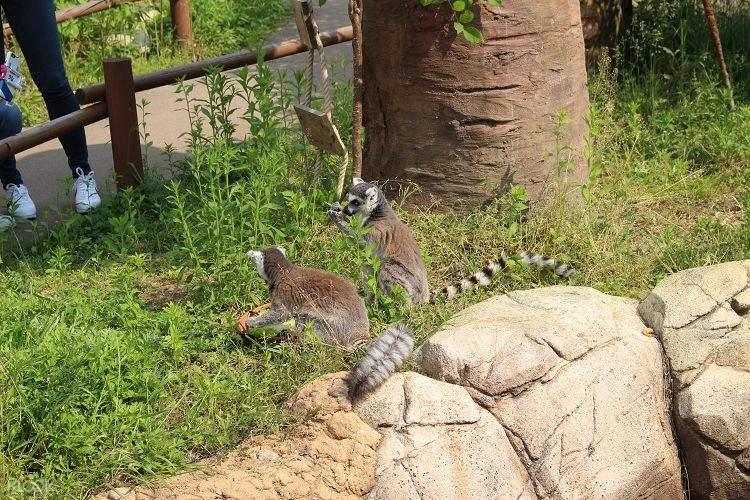 seoul zoo animals