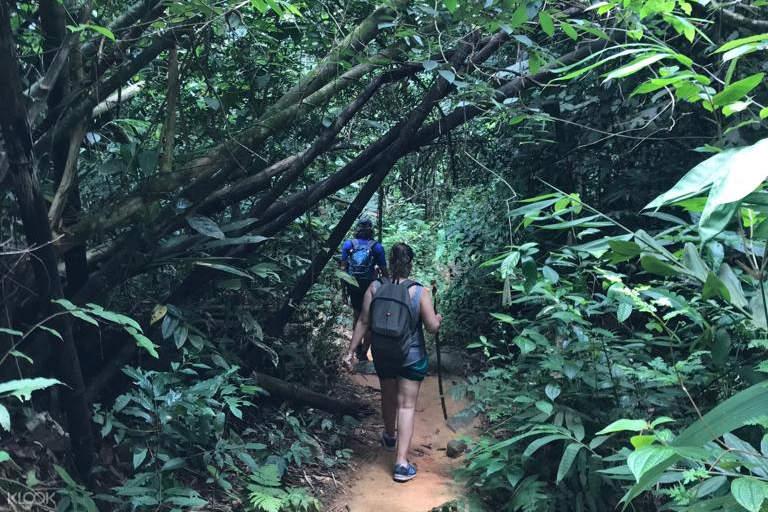 trekking through jungle