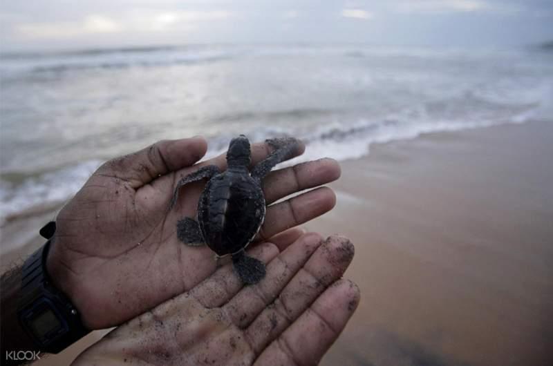 turtle hatchery