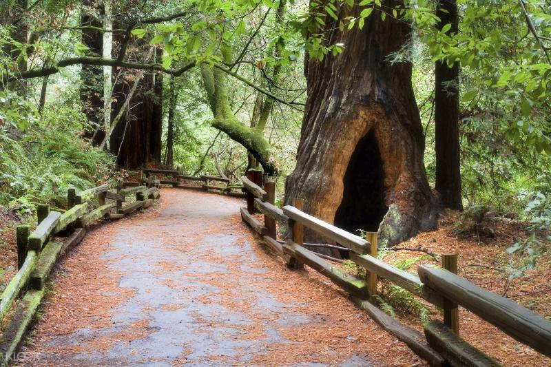 san francisco muir woods