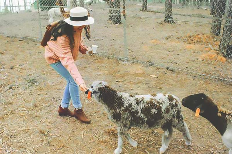 girl feeding animal in zoodoo da lat