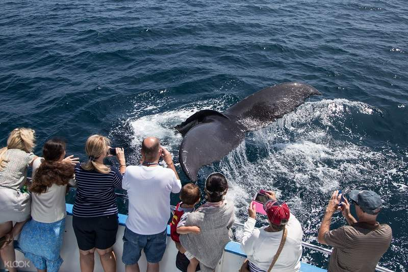 纽波特海滩观鲸游船之旅