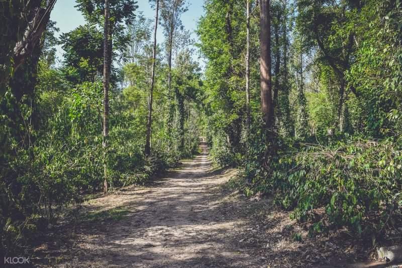 印度 卡納塔克邦 果達古咖啡種植園之旅