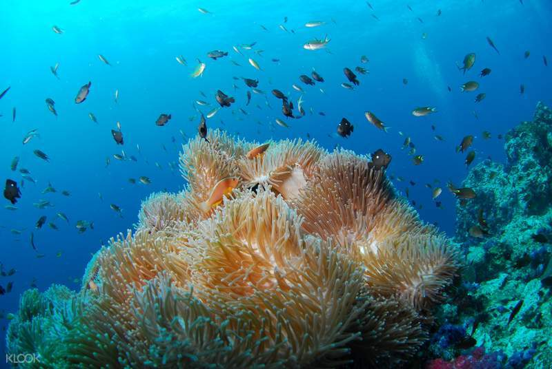 scuba diving experience in andaman islands