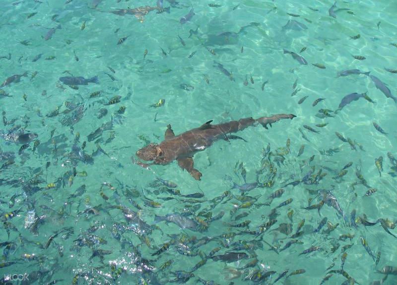 马来西亚潜水