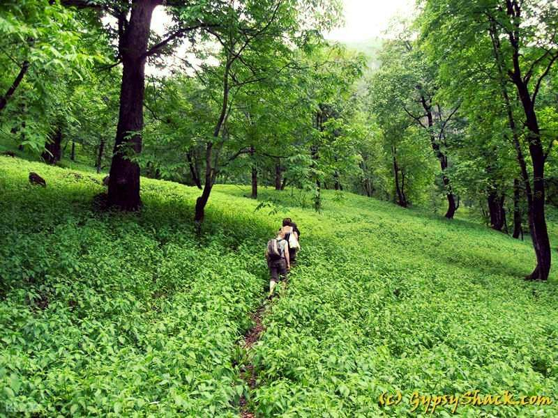 Manali forests