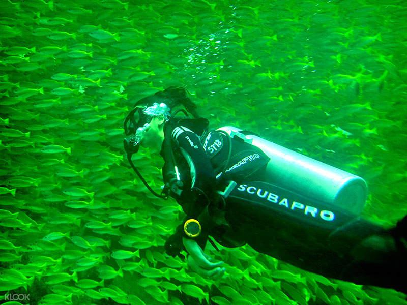 tunku abdul rahman island diving experience sabah