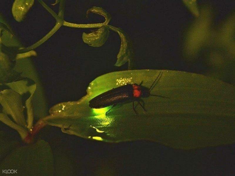 firefly at night