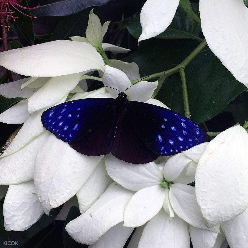 entopia butterfly farm discount