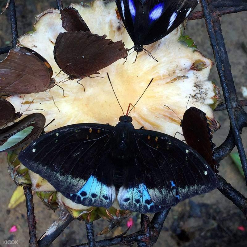 Entopia,马来西亚蝴蝶馆,槟城蝴蝶馆,马来西亚昆虫馆,槟城昆虫馆,马来西亚一日游,槟城一日游