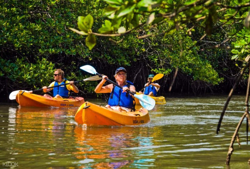 Mangrove Kayaking Experience in Havelock Island from Andaman Islands