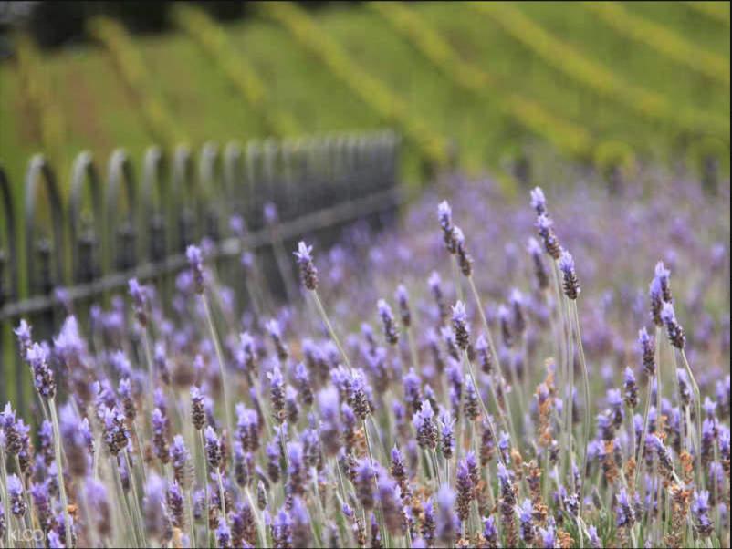 Waiheke island flowers