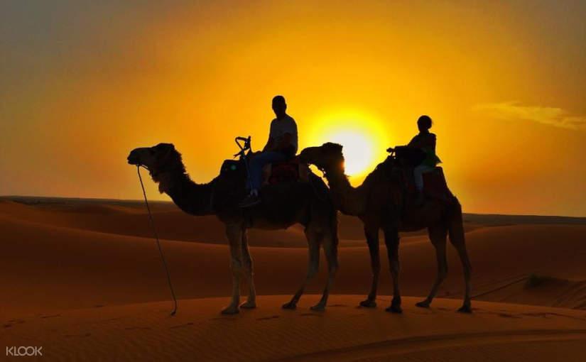 賈沙梅爾駱駝沙漠越野