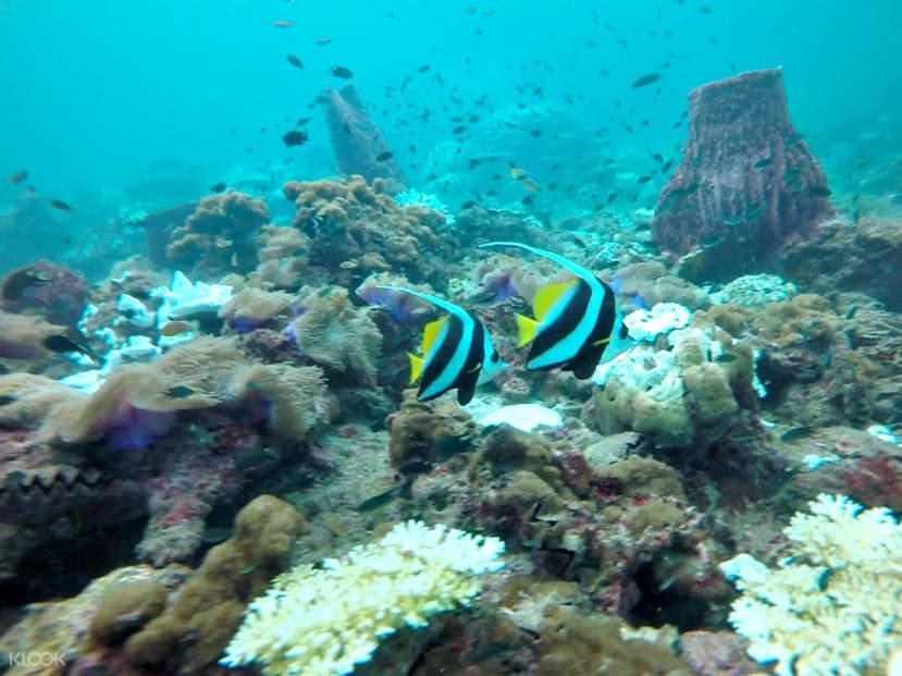 pulau Payar corals