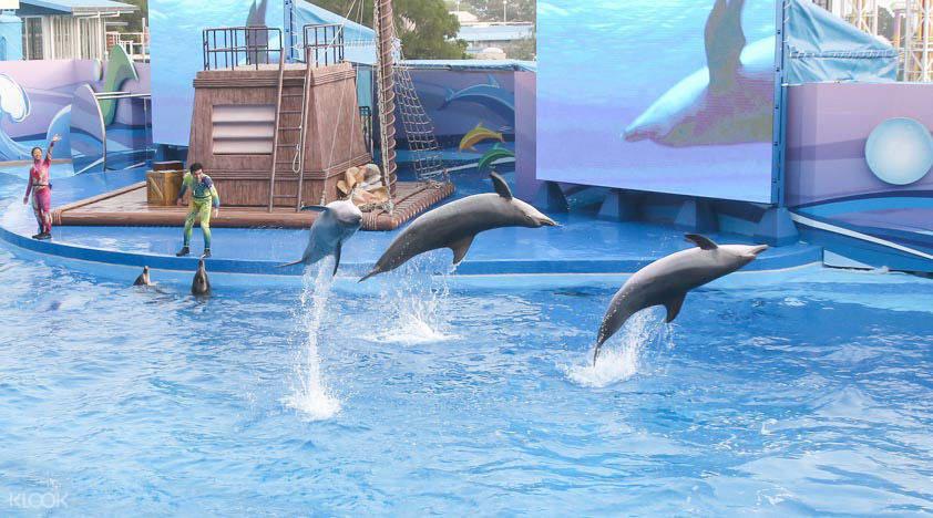 hong kong ocean park attractions