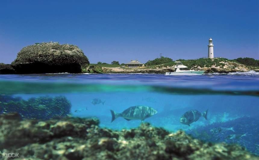 罗特尼斯岛潜水游