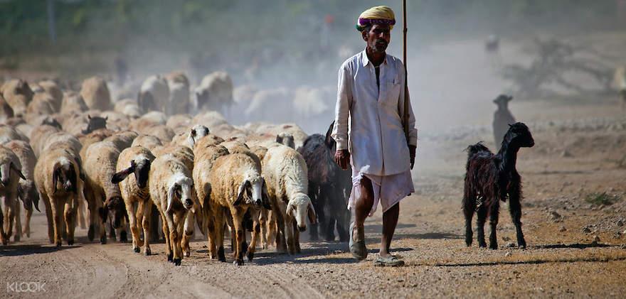 Shepherds village
