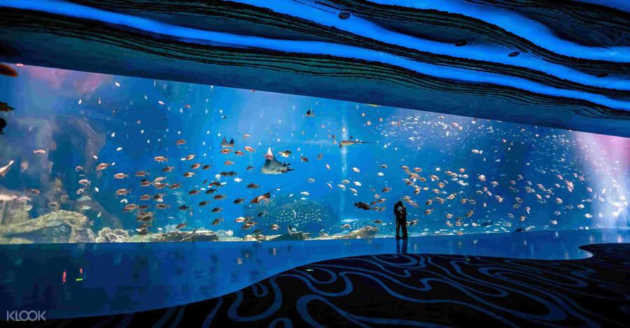 珠海長隆海洋王國,珠海長隆海洋王國門票,長隆海洋王國,長隆海洋主題公園
