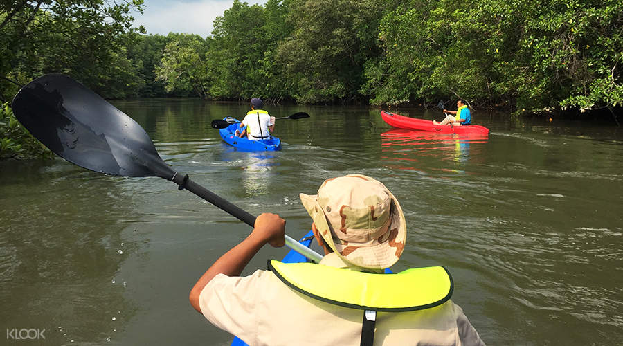 mangrove kayaking experience at chill cove treasure bay bintan