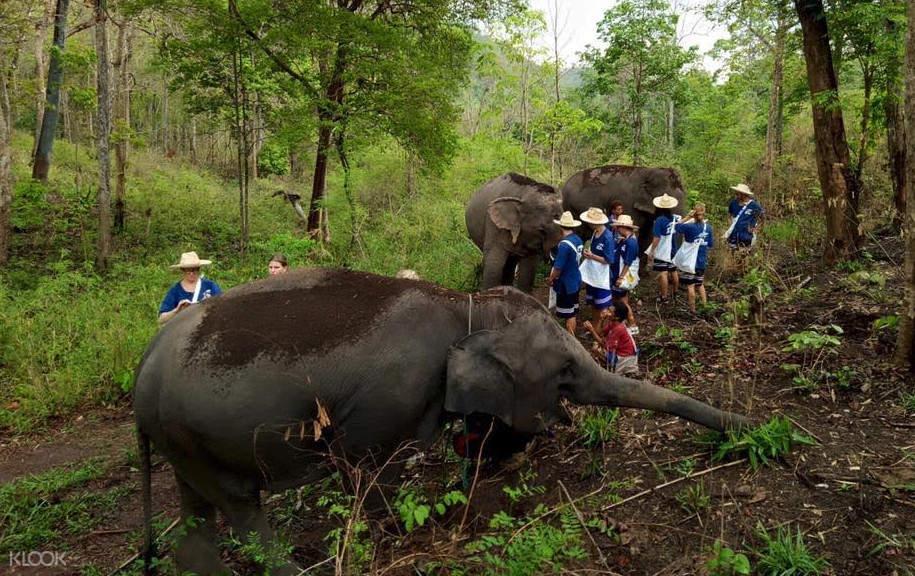 清迈山保护区大象护理体验