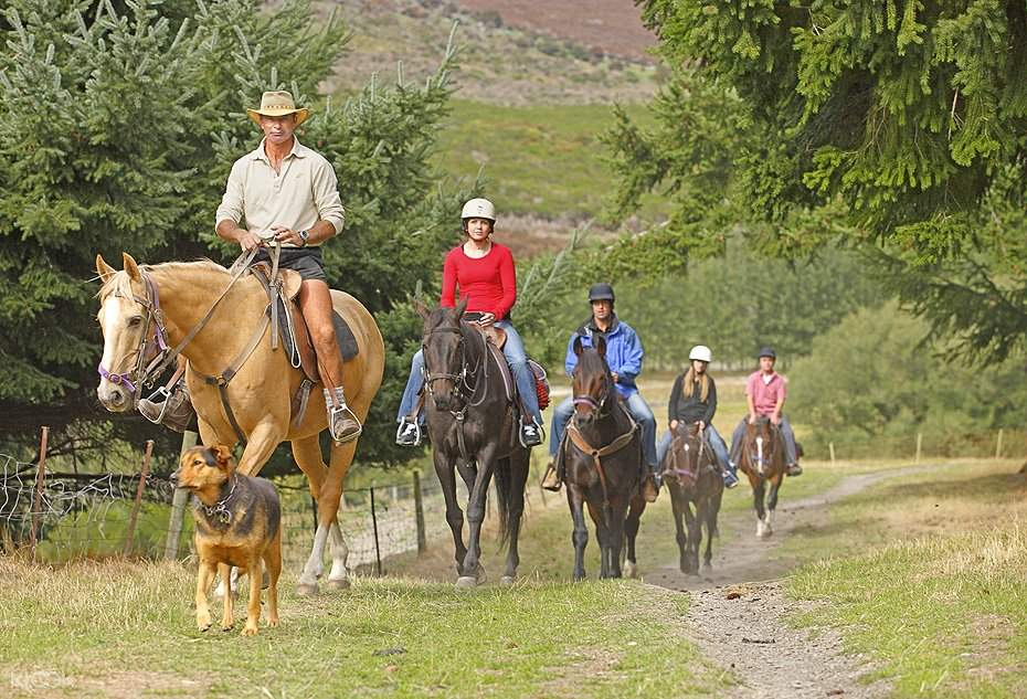 Walter Peak Horse Trek