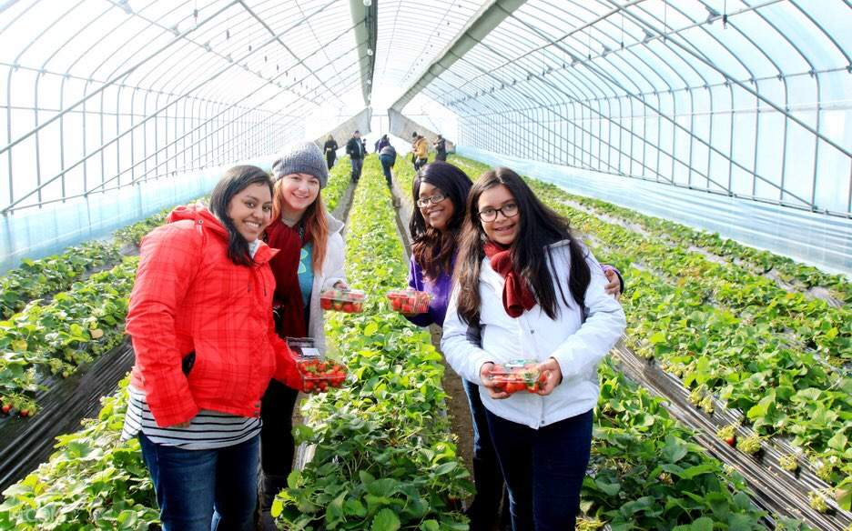gangwon-do day tour strawberry picking