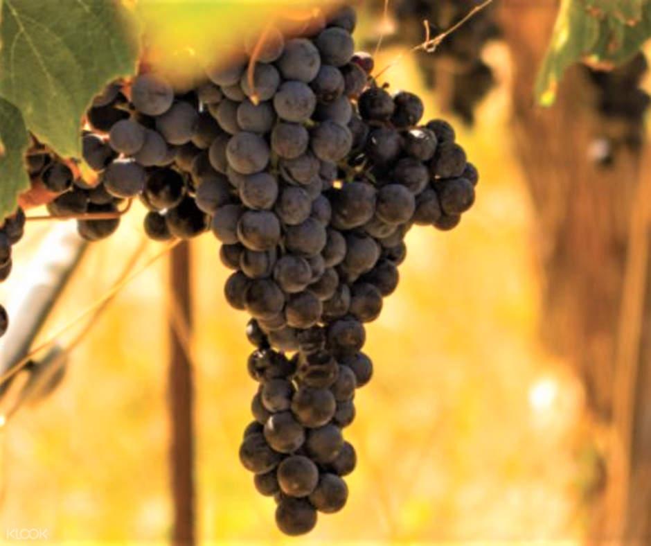a stem of grapes