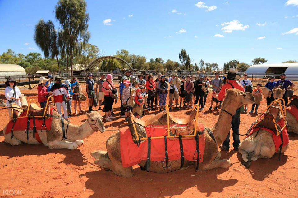 tourists enjoying a briefing before a camel ride