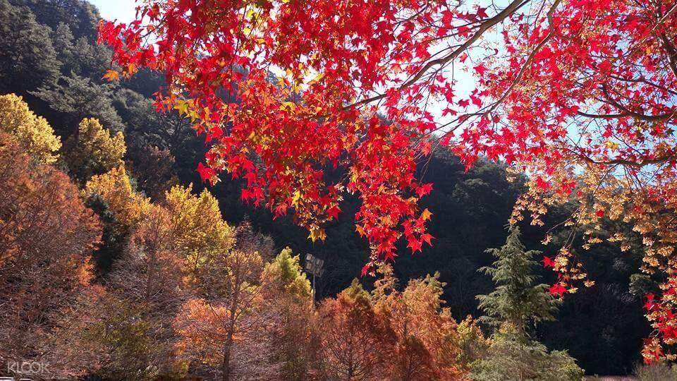 宜蘭 武陵農場森呼吸一日遊