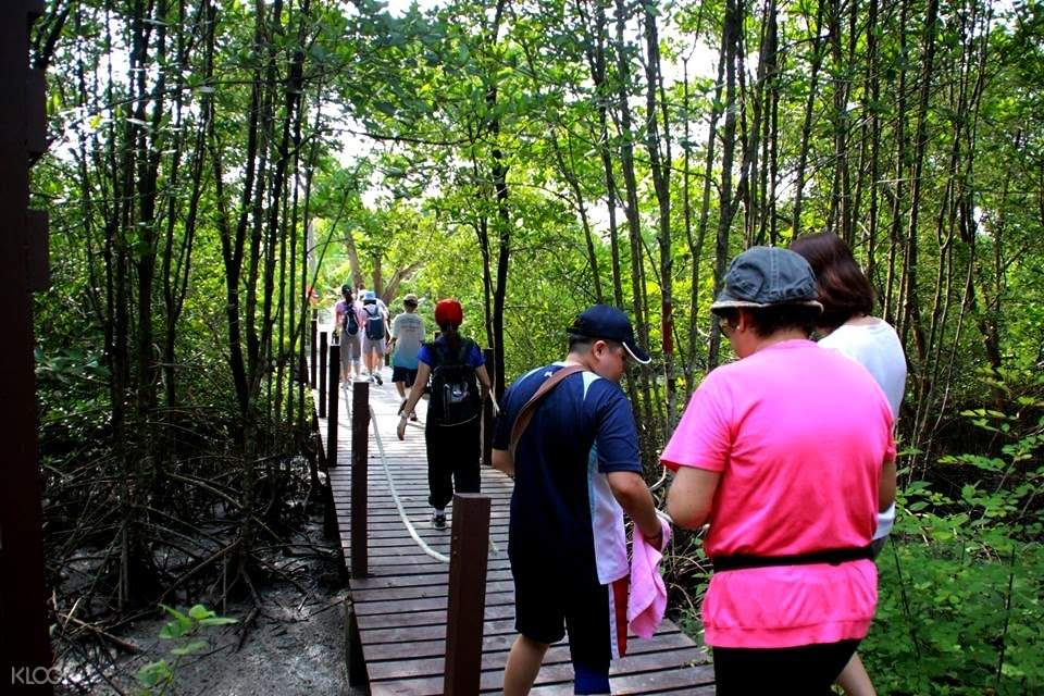 People walking in a line through the Mangrove Forest