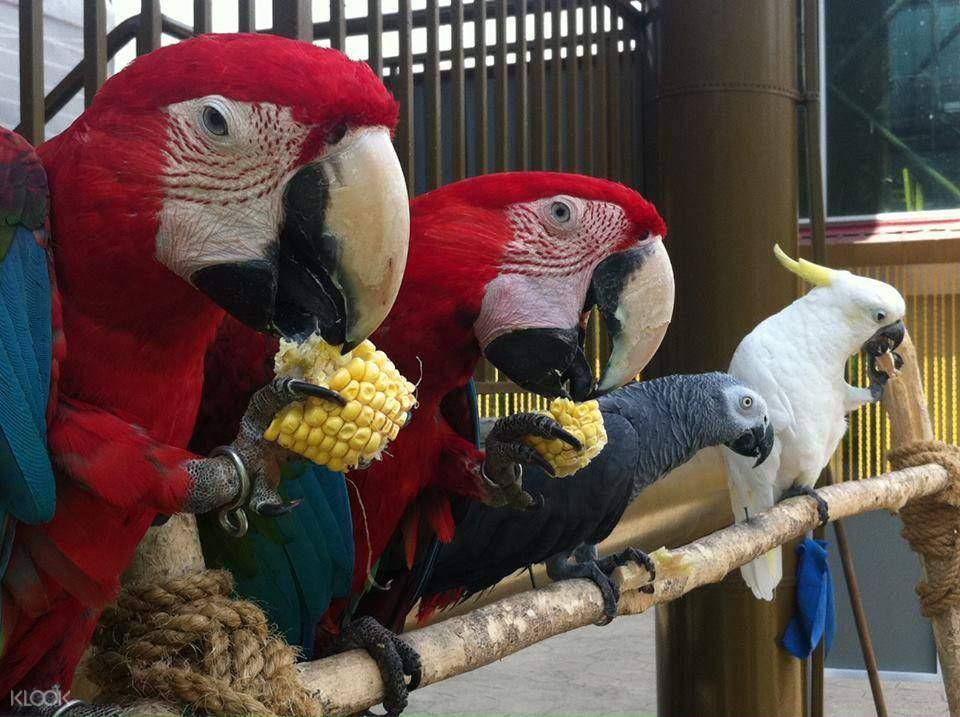 吉隆坡Melaka鸟园
