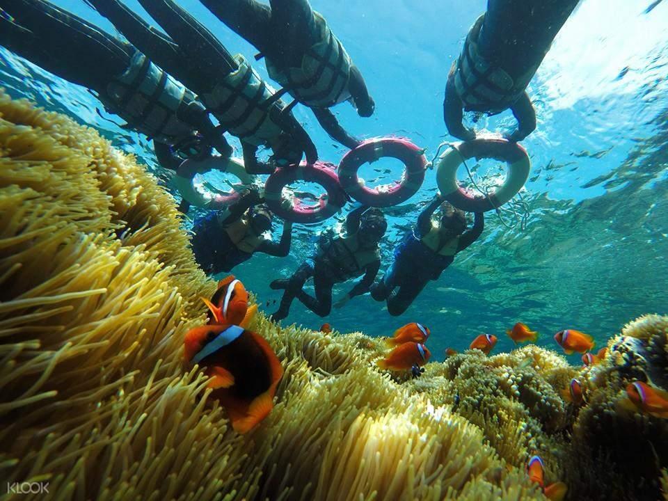 蘭嶼浮潛體驗