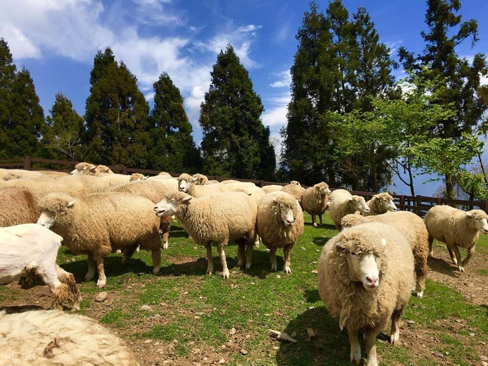 Cingjing Farm Shared Transfers between Cingjing Farm & Sun Moon Lake and Taichung, Taiwan