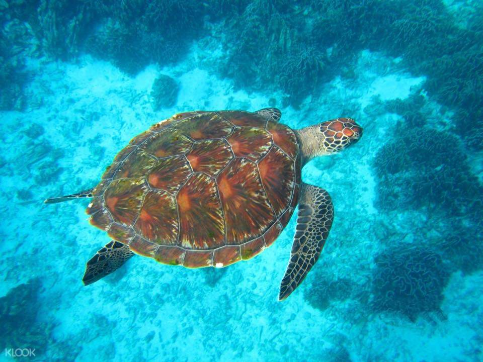 similan islands tour thailand