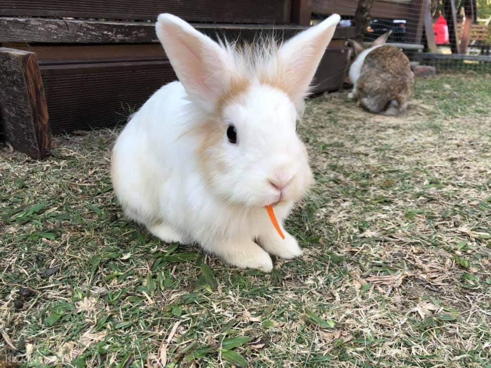 元朗 小白兔農莊 - 親子活動好去處
