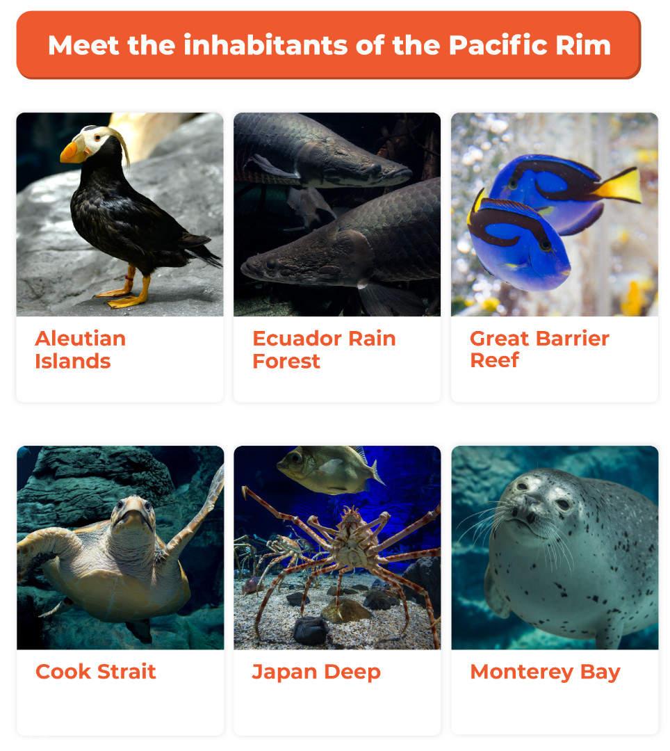 Pacific Rim Osaka Aquarium