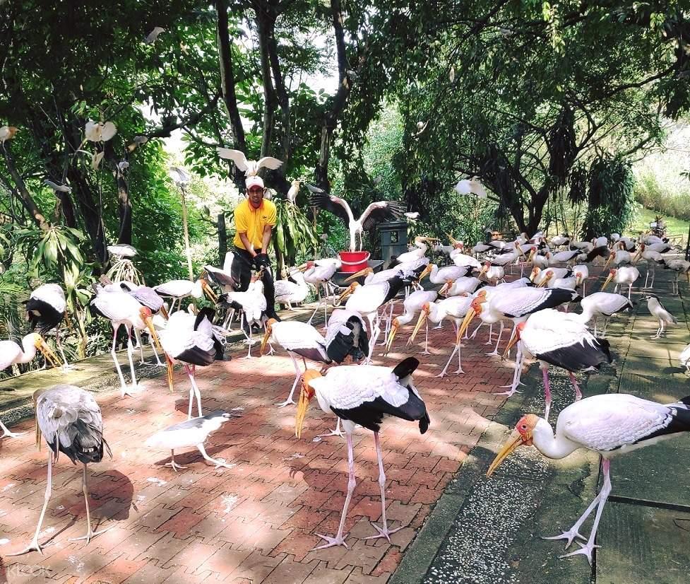 kl bird park admission ticket kuala lumpur