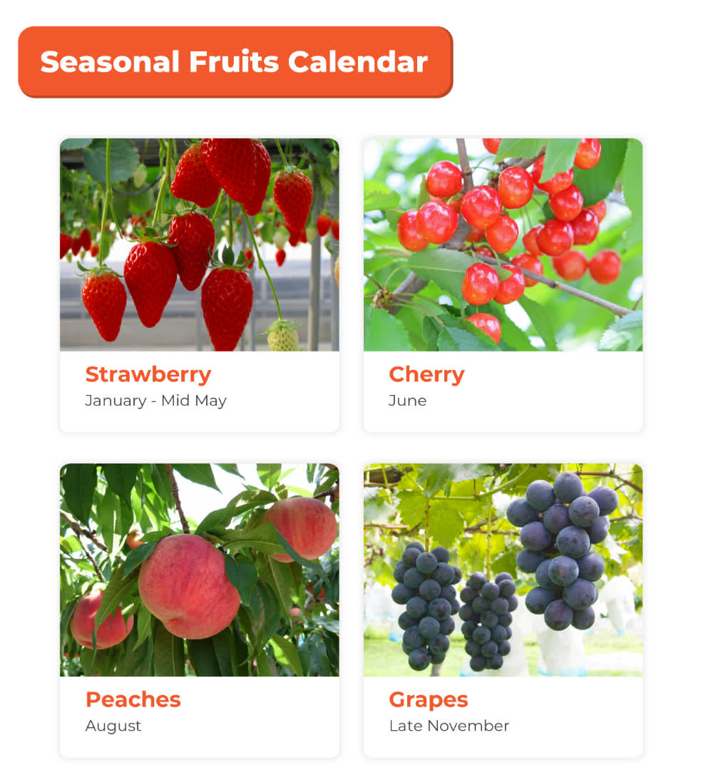 seasonal fruits for the fruit picking activity near mt. fuji