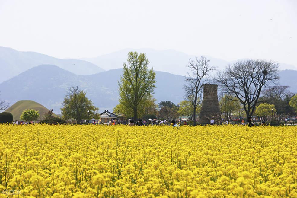 韓國銀杏大道