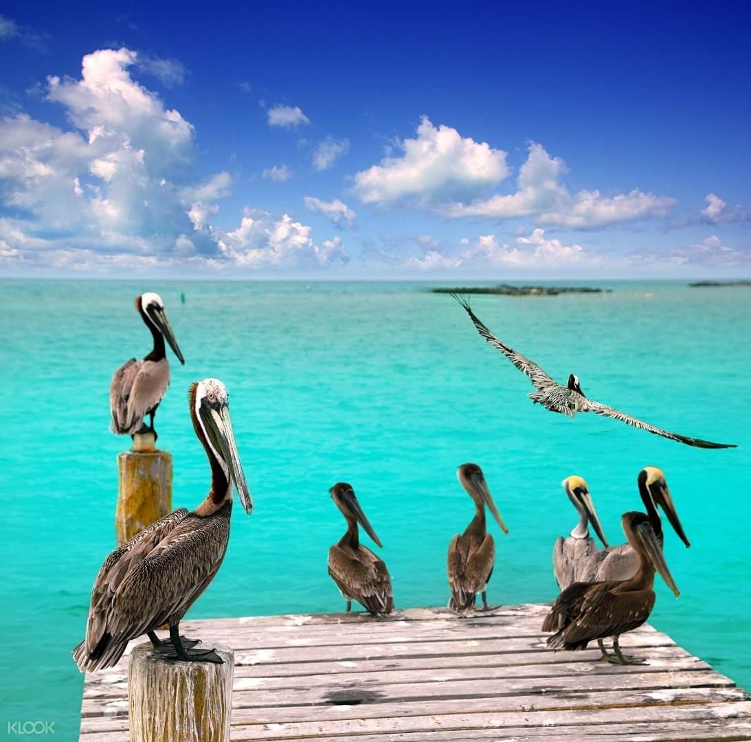 Wildlife in Isla Mujeres