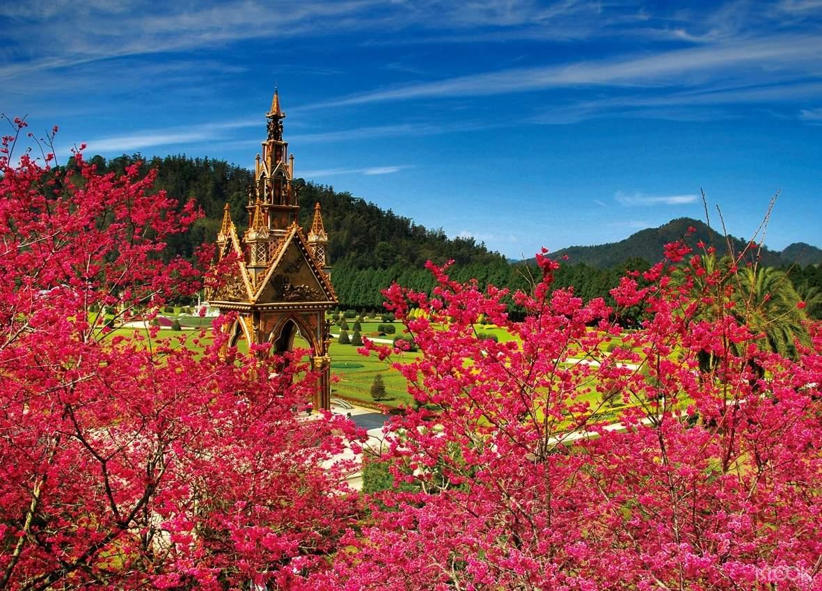 櫻花樹密集度超高的九族,園區內滿滿一整片的粉紅花海
