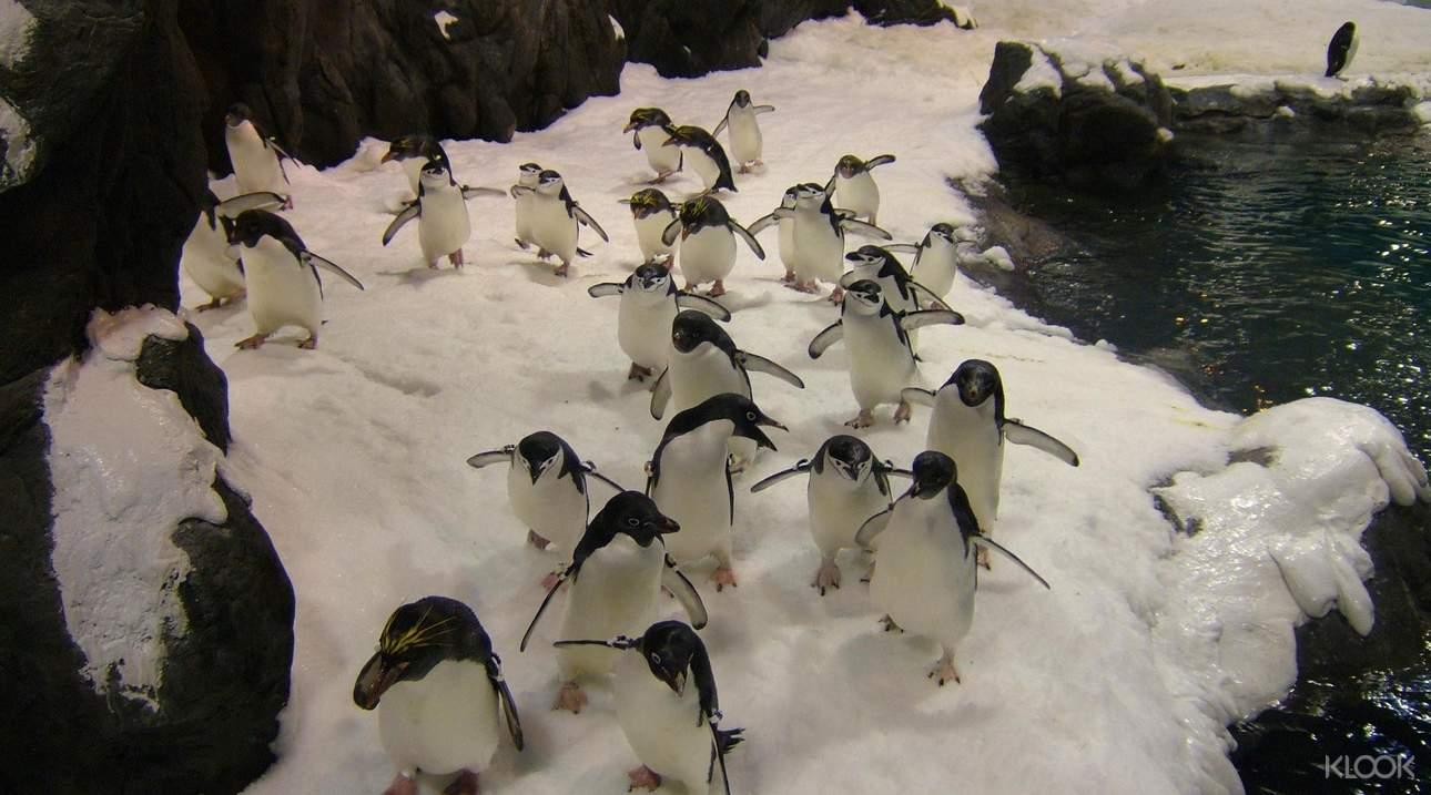千萬別錯過萌翻天的企鵝,近距離他們可愛的模樣