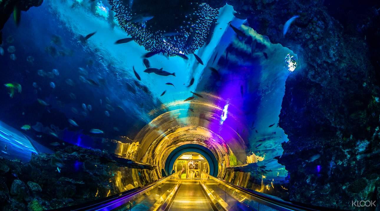 漫步海底隧道,欣賞眼前湛藍神秘的海洋世界