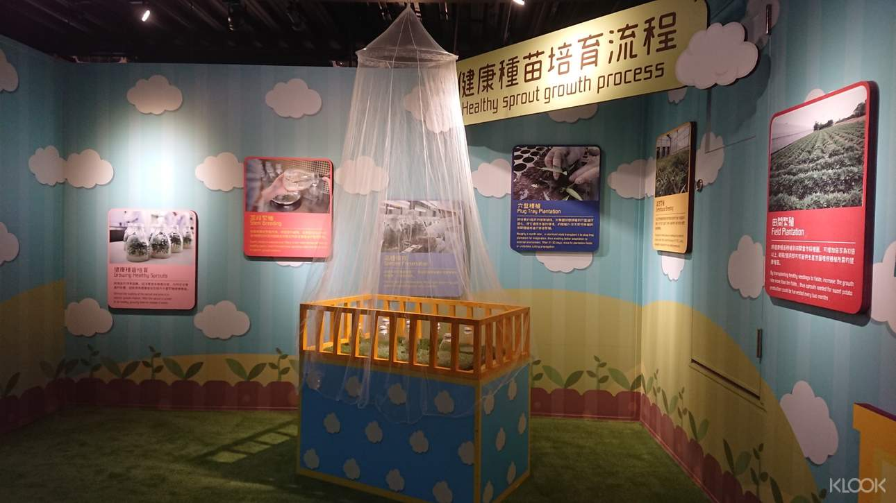 走進地瓜育嬰房,了解健康種苗的培育流程